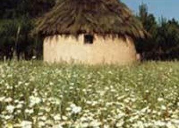 Finca Paraje el Pinar de Talayuela, 10310 Talayuela, Albergue Quinto Pino