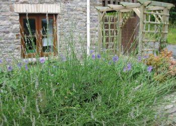 Wohnung Aberdare, Cwmbach, Blaen-nant-y-groes Farm Cottages